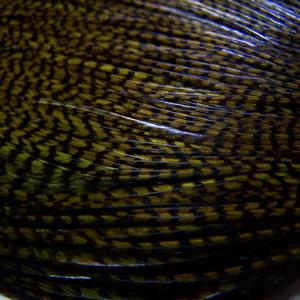 Whiting Hackle Grizzly dyed Dark Olive