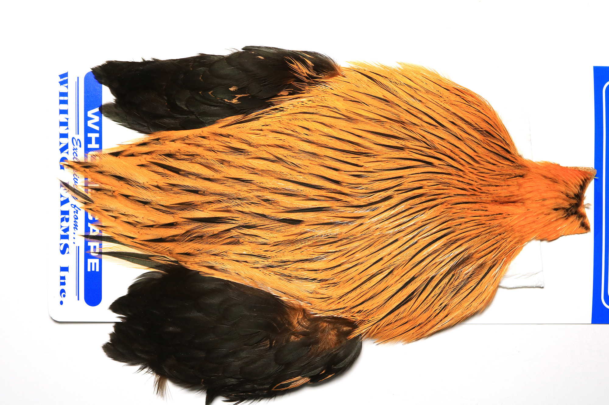 FWSC-4623 Whiting Freshwater Streamer Cape Badger dyed Shrimp Orange