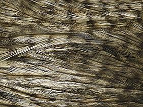 Whiting Hackle Grizzly Pardo