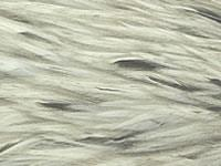 Whiting Hackle Hebert Light Grey Dun
